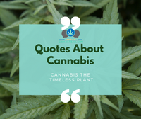 Quotes About Cannabis