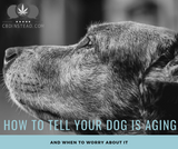 Signs Your Dog Is Getting Older And When To Worry