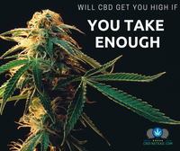 Will CBD Get You High If You Take Enough?