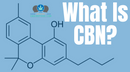 What Is The Cannabinoid CBN?