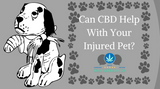 Can CBD Help With My Injured Pet?