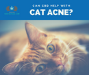 CBD For Cat Acne