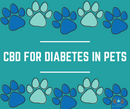 CBD For Diabetes In Pets