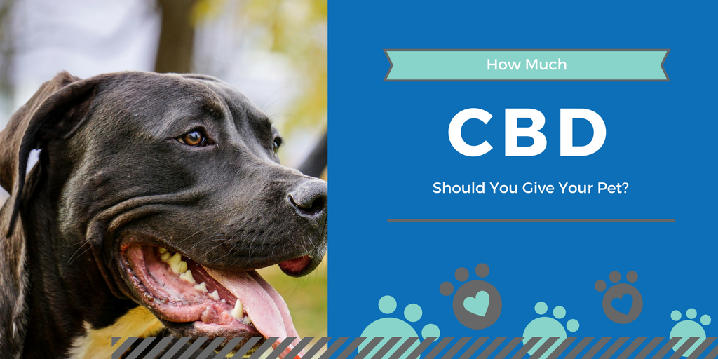 How Much CBD Should You Give Your Dog?