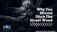 Why You Should Ditch The Street Weed