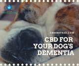 CBD For Your Dog's Dementia