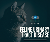 CBD For Feline Urinary Tract Disease