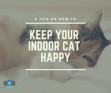 8 Tips To Keep Your Indoor Cat Happy
