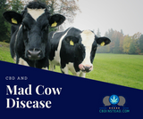 CBD And Mad Cow Disease