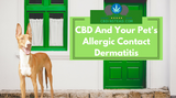 CBD And Your Pet's Allergic Contact Dermatitis