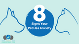 8 Signs Your Pet Has Anxiety
