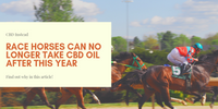 Race Horses Can No Longer Take CBD Oil After This Year
