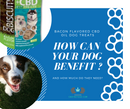 Bacon Flavored CBD Dog Treats: How Can Your Dog Benefit And How Much Do They Need?