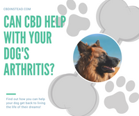 Can CBD Help Your Dog's Arthritis?