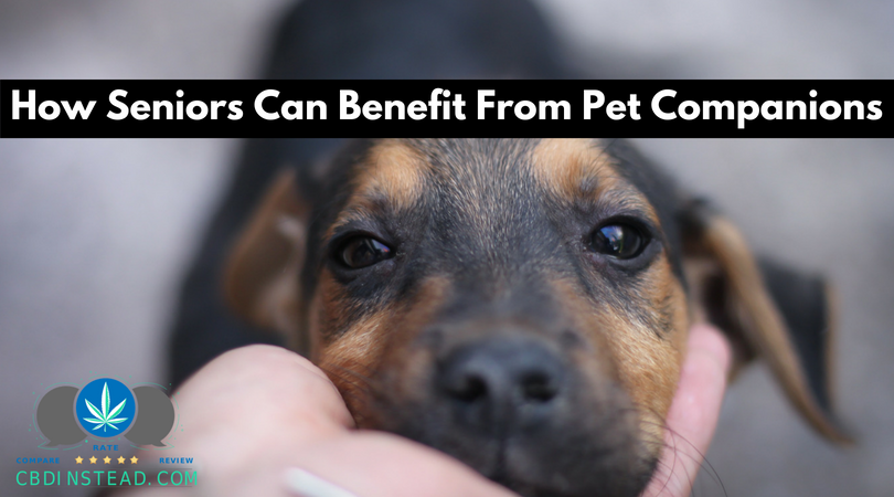 How Seniors Can Benefit From Pet Companions