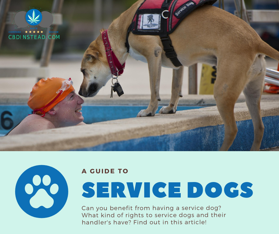 A Guide To Service Dogs
