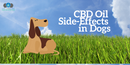 CBD Oil Side-Effects in Dogs