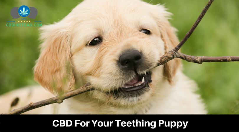 CBD For Your Teething Puppy