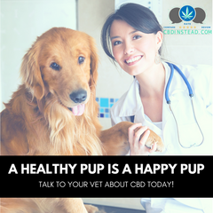Talk to your vet before giving CBD to your pet