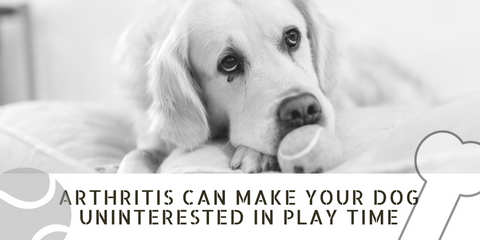 Arthritis makes your pet uninterested in play