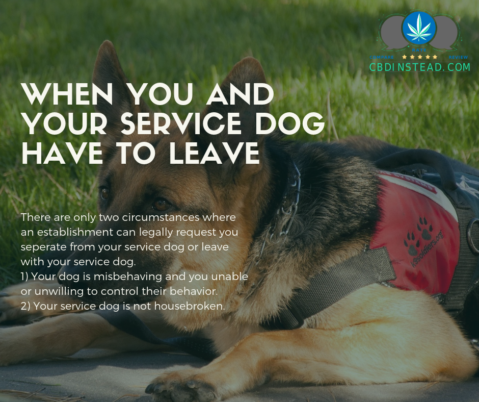 A Guide To Service Dogs – CBD Instead
