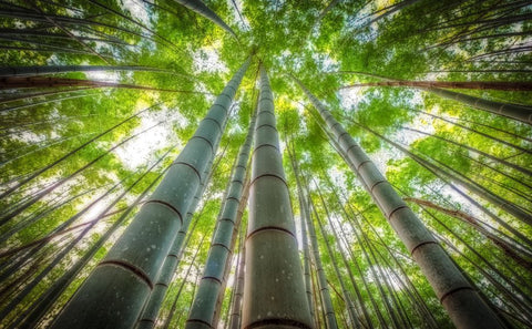 Bamboo making the world greener Bamboo forest