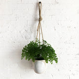 Hanging Planter: Full Moon
