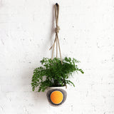 Hanging Planter: New Eye Marigold