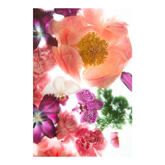 Shades of Pink II Floral Photo by Wiff Harmer - Wall Art - Wiff Harmer - Salut Home