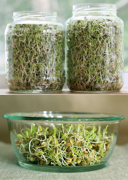 Soaking & Sprouting 101