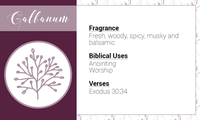 Essential Oils of the Bible Cards