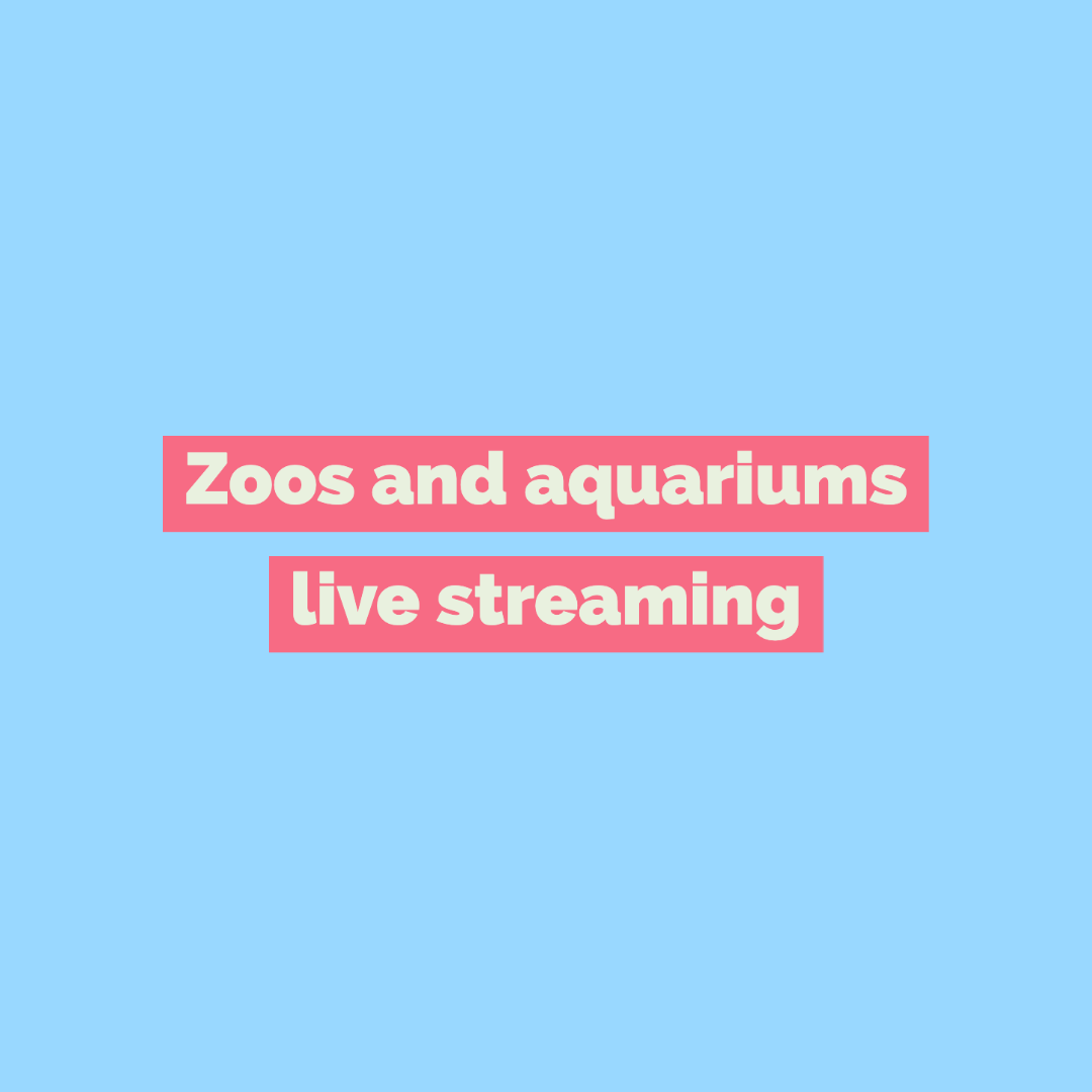 Zoos and aquariums live streaming