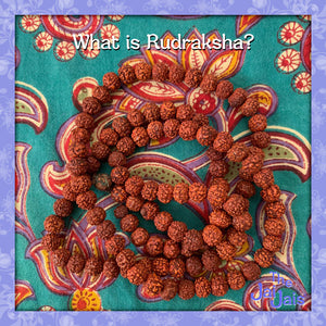 What is a Rudraksha?