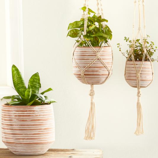 Fair trade planters in etched terracotta for the indoor plant lover