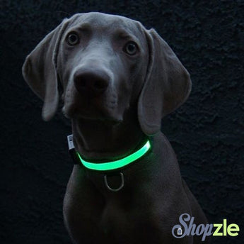 LED Pet Collar (Many Sizes Available)