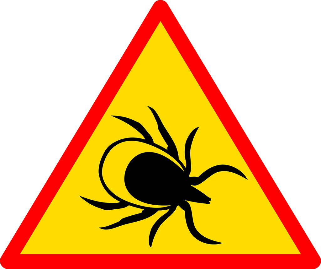 Can Lyme Disease Cause Neuropathy?