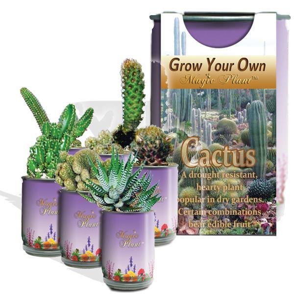 Grow Your Own Magic Plant Cactus