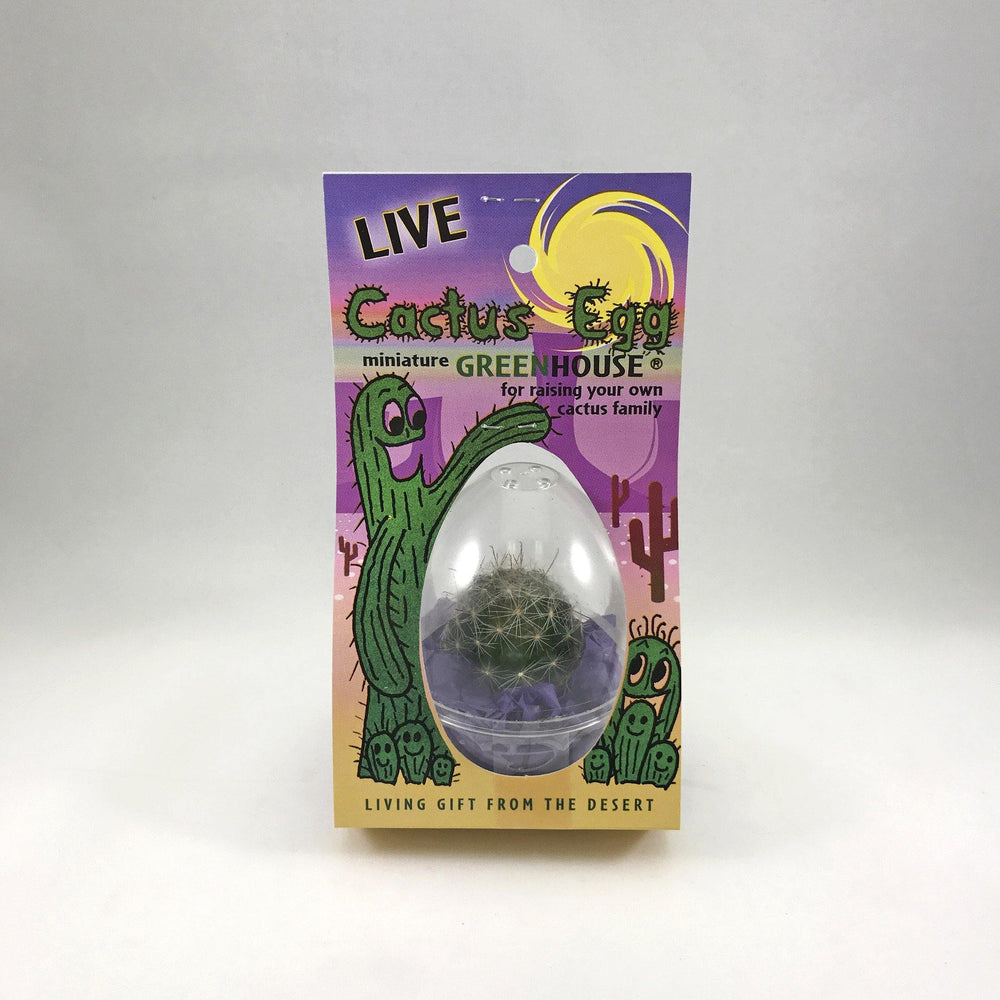 Live Cactus Egg - Desert Gatherings