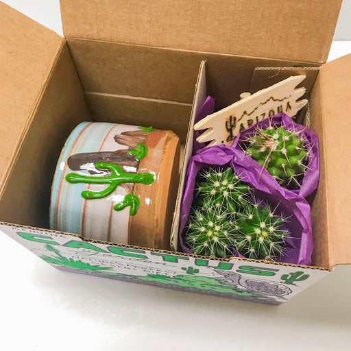 Purple Turtle Cactus Kit
