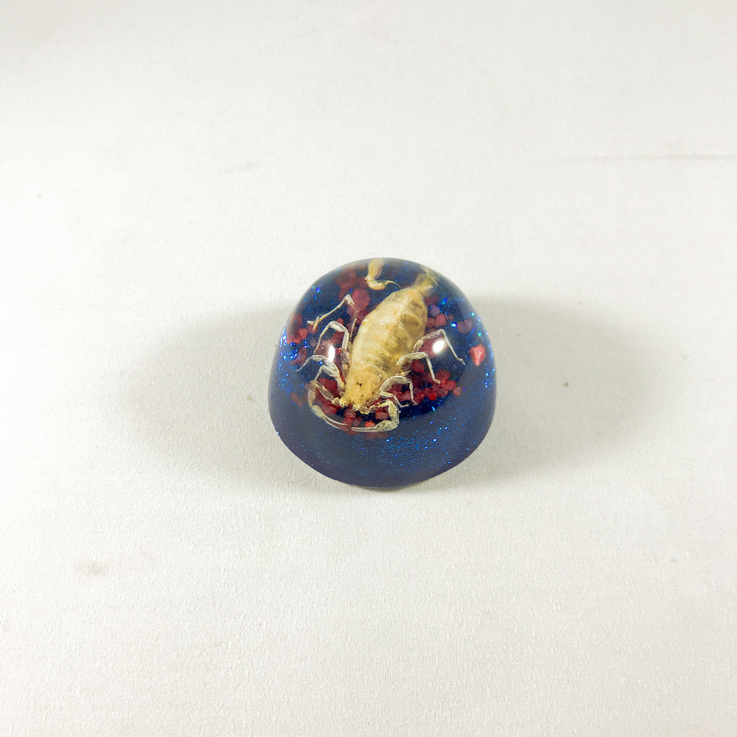 Small Scorpion Dome Paperweight