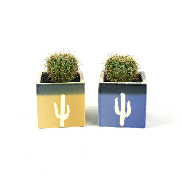 Glazed Square Pot Cactus - Desert Gatherings