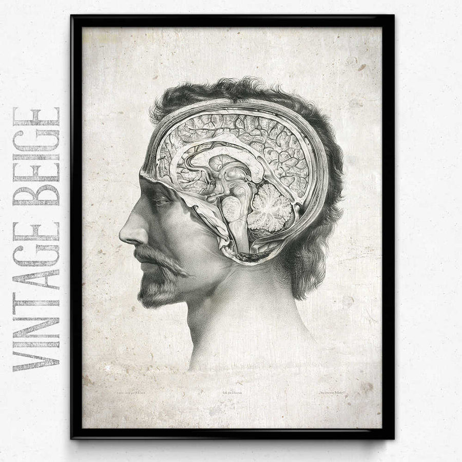 Anatomy Head and Brain Vintage Print - Anatomy Poster