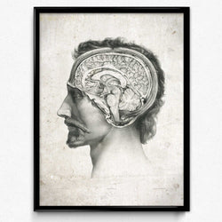 Anatomy Head and Brain Vintage Print - Orion Wells