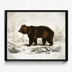 Bear Wildlife Vintage Print 쇼핑- Orion Wells
