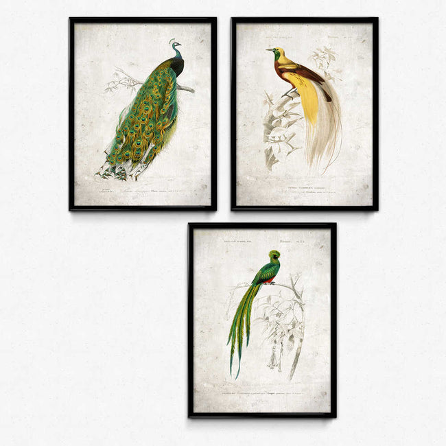 Beautiful Birds Vintage Print Set of 3 - Orion Wells