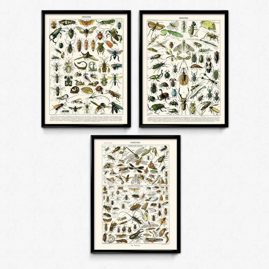 Shop for Beautiful Bugs Set of 3 Vintage Prints - VP1071 - Orion Wells
