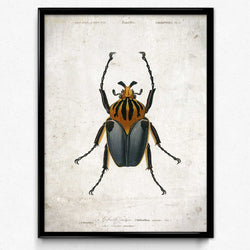 Osta Beetle Vintage Print 1 - VP1093 - Orion Wells