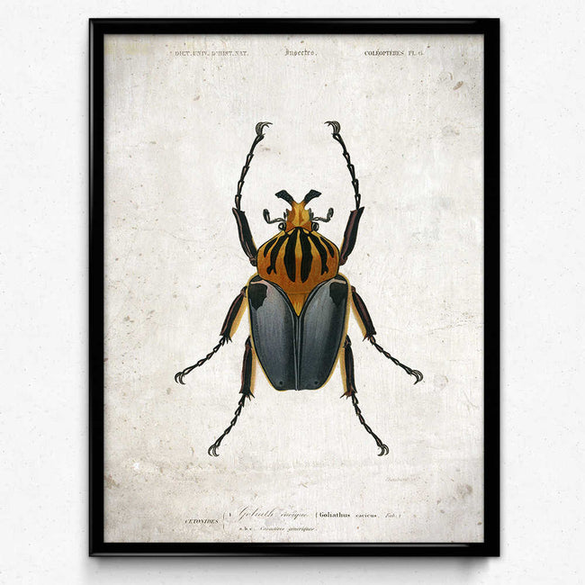 Shop for Beetle Vintage Print 1 - VP1093 - Orion Wells