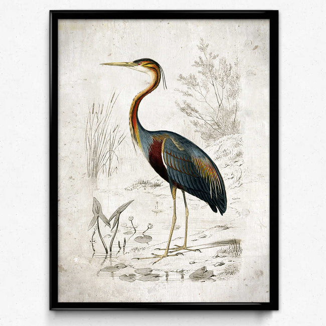 Purple Heron Bird Vintage Print 쇼핑-Orion Wells