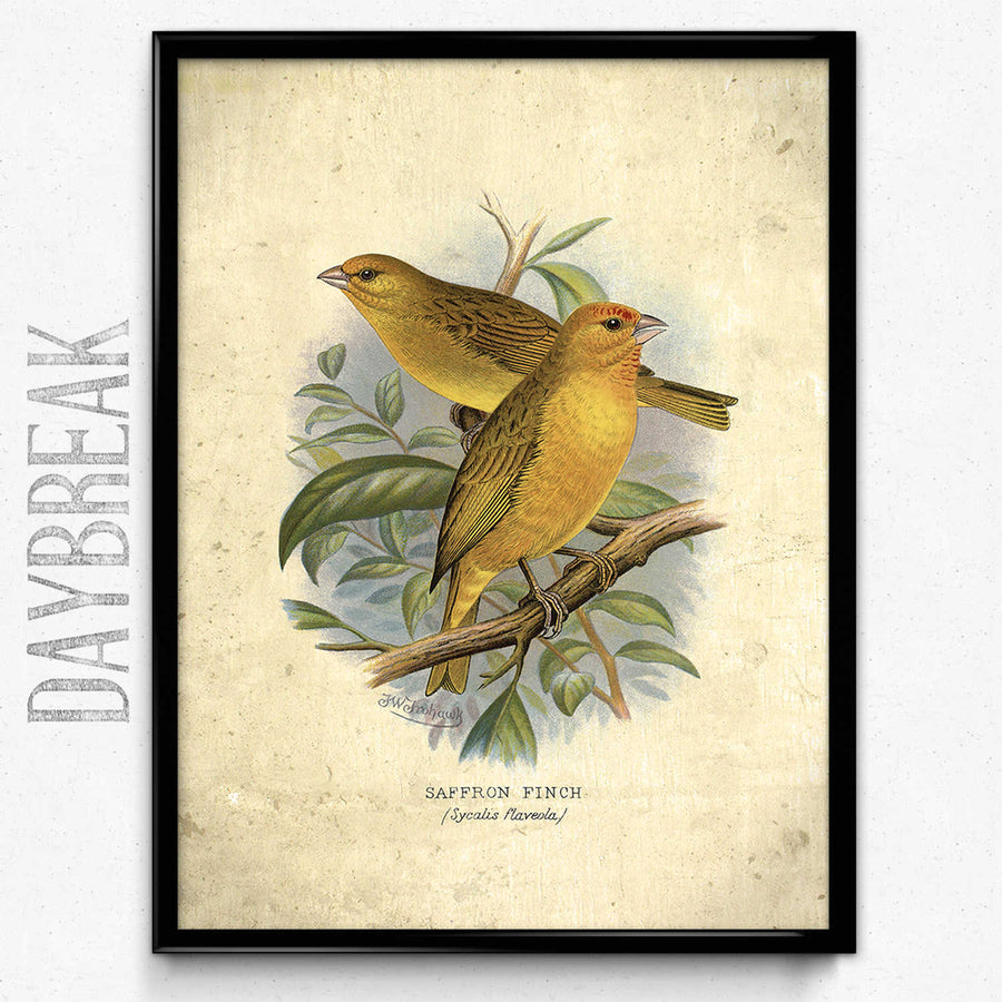 Shop for Yellow Birds Vintage Print 23 - VP1185 - Orion Wells
